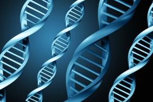 Gene Tests Determine Risk For Celiac Disease