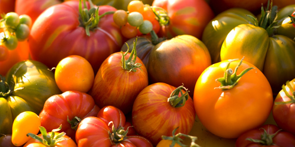 Tomatoes Nutritional Value And Health Benefits